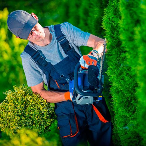 Jardineros profesionales en Mallorca